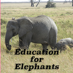 Video About Education for Elephants