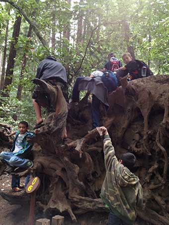 big-tree-root