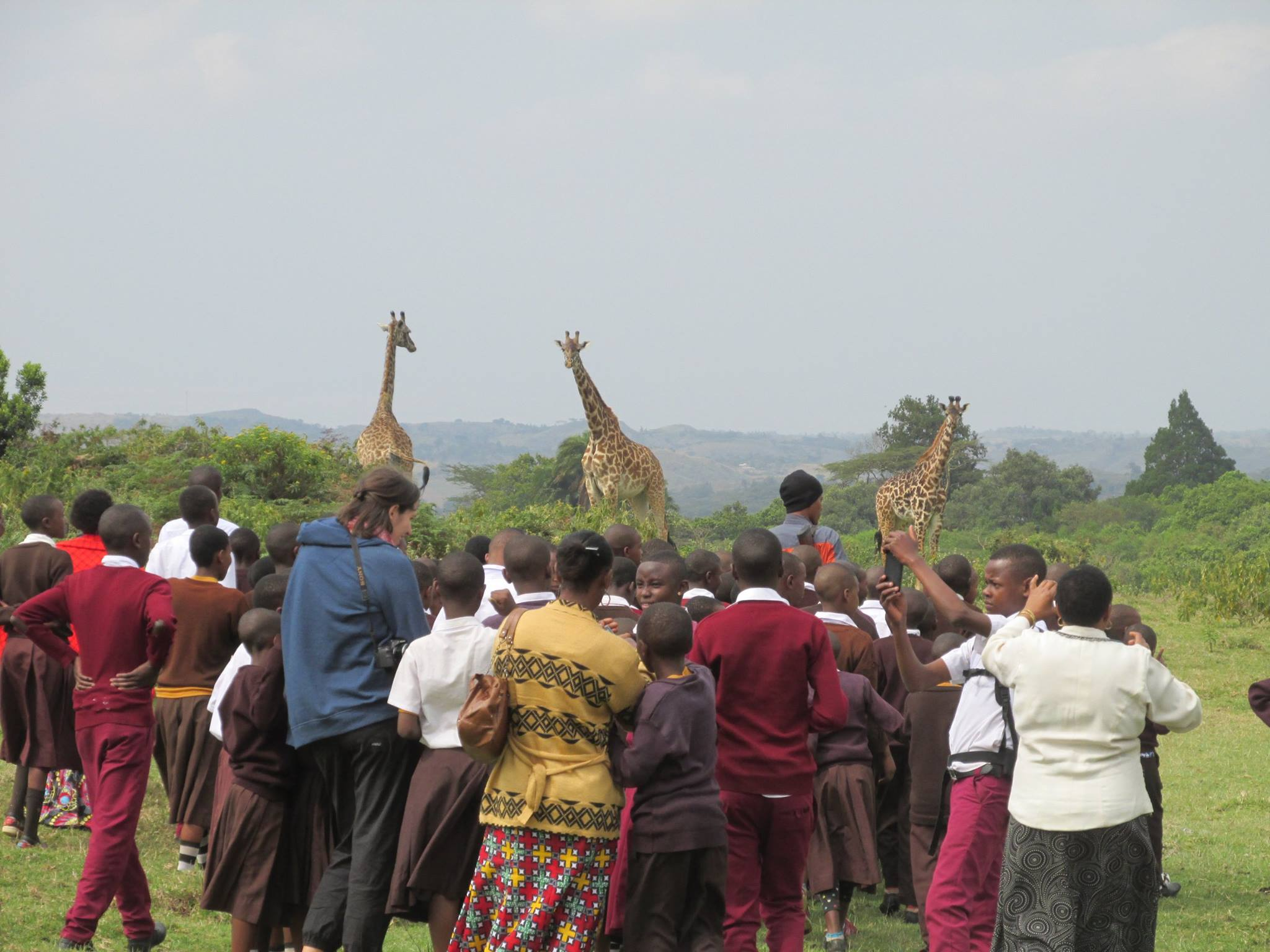 group with giraffes
